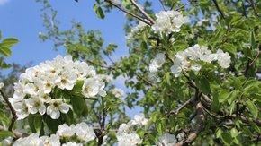 Майские праздники открыли туристический сезон в Крыму